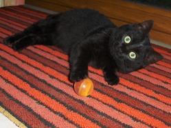 Haribo, chat Gouttière