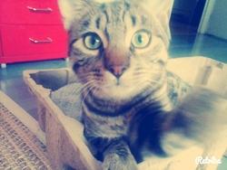 Harry, chat Gouttière