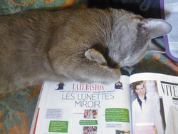 Harry, chat