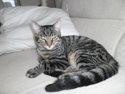 Hash, chat Gouttière