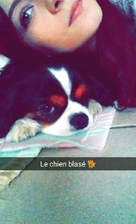Haskell, chien Cavalier King Charles Spaniel