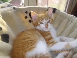 Hatchi, chat Gouttière