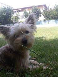 Havana, chien