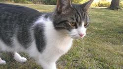 Havanne, chat
