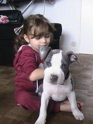 Hboss, chien American Staffordshire Terrier