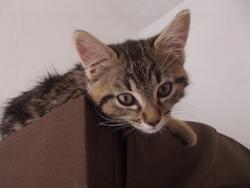 Hécate, chat Gouttière