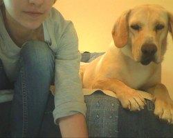 Hector, chien Labrador Retriever