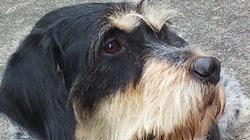 Hector, chien