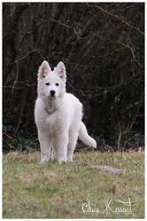 Heidi, chien