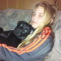 Heidi, chien Labrador Retriever