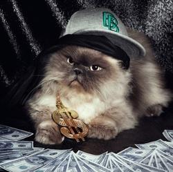 Heinrich, chat Persan