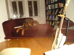 Helene, chien Dobermann