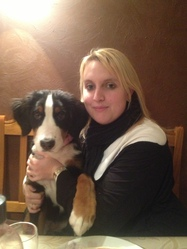 Helfy, chien Bouvier bernois
