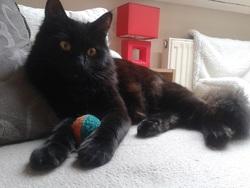 Hélia, chat Gouttière
