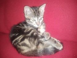 Héline, chat
