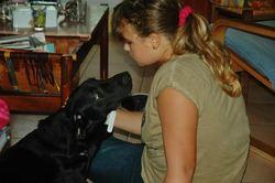 Hélios , chien Labrador Retriever