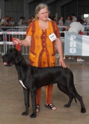 Hellina Du Bon Presage, chien Dogue allemand