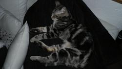 Hells, chat Gouttière