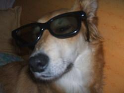 Héllya, chien Border Collie