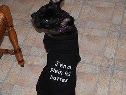 Helna, chien Bouledogue français