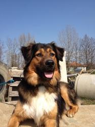 Hendricks, chien