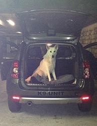 Hendrix Legend, chien Berger blanc suisse