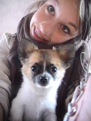 Henzo, chien Chihuahua