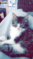 Héra, chaton