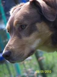 Herine, chien