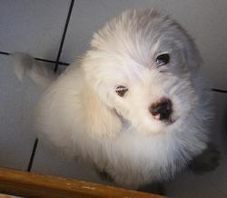 Hermès, chien