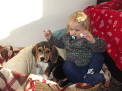 Hermès, chien Beagle