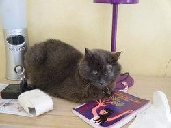 Hermine, chat Gouttière