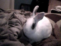 Hermione Rip, rongeur Lapin