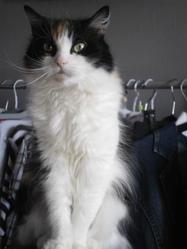 Hermione, chat Gouttière
