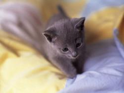 Hermionne, chat Gouttière