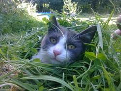 Hernest, chat Gouttière