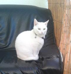 Heroine, chat Gouttière