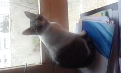 Hera, chat Européen