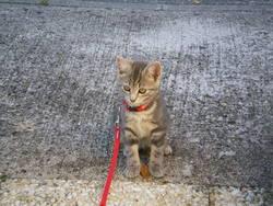 Hewlett, chat Gouttière