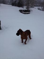 Heyko, chien