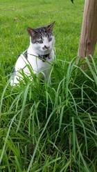Hijo , chat Gouttière
