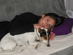 Hirys, chien Jack Russell Terrier