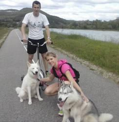 Hitch, chien Husky sibérien