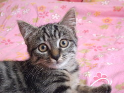 Hizzie, chat Gouttière