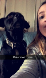 Holby, chien