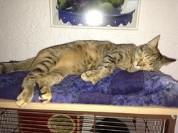 Holine, chat Gouttière