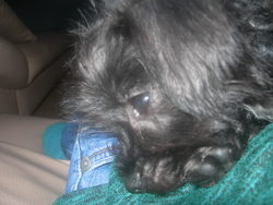 Holly, chien