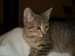 Homer, chat Gouttière