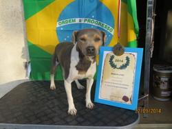 Honroso Du Domaine Des Mandets, chien Terrier brésilien