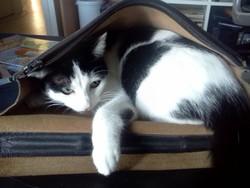 Hope, chat Gouttière
